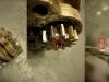 Czas na pompę oleju. W zazębieniu widać echa dawnych przygód w silniku. Pompa jest wadliwie wykonan - koła zębate są zaniżone na 0,25mm względem dekla zamykającego - to powoduje znaczny spadek jej wydajności.