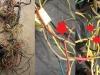 Czas na naprawę i przegląd instalacji elektrycznej   /    Time for repair and inspection of electrical installation